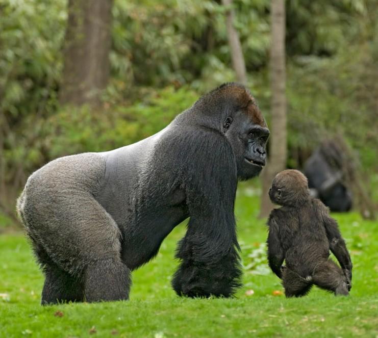 Раскрывают тему природы и животных