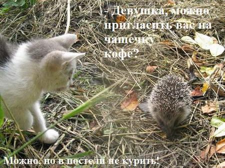 Смешные Картинки С Ежиками: http://war-warrior.ru/smeshnye-kartinki-s-ezhikami.html
