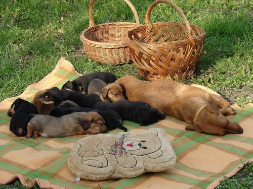 Спящие коты и собаки. Умиление!