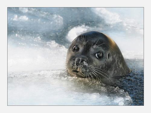 Фотографии с интересными моментами из жизни животных