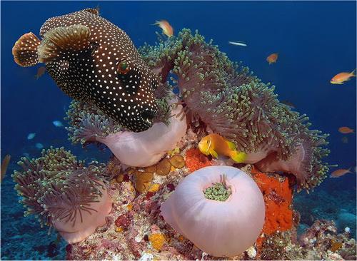 Фотоочевидец краски подводного мира