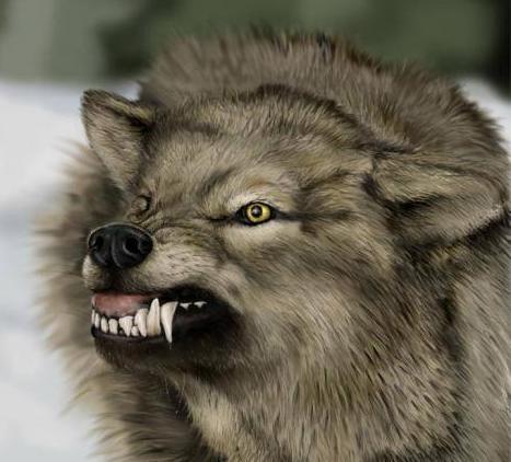 А вот и знаменитый волчий оскал