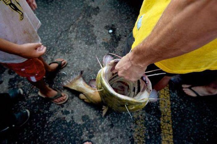 как поймать рыбу голыми руками