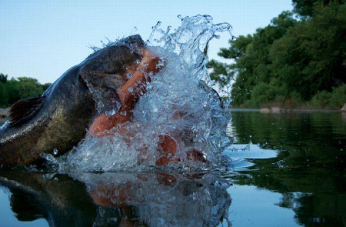 ловить огромную рыбу руками