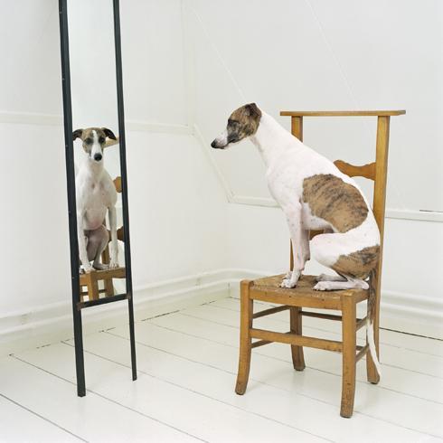 Собаки... Фотограф Maarten Wetsema