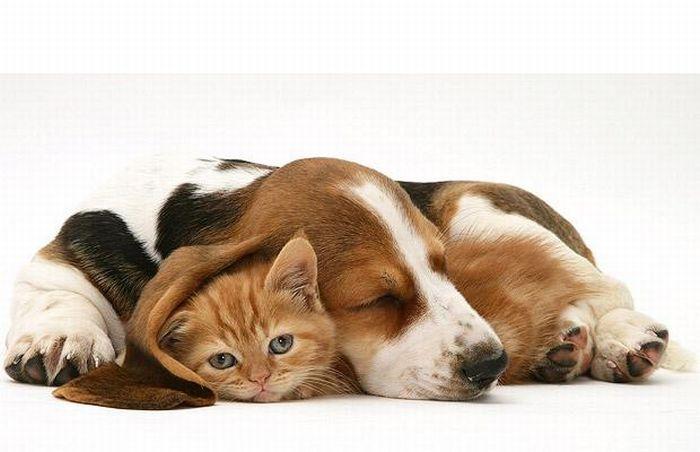 Фотограф jane burton и его котята