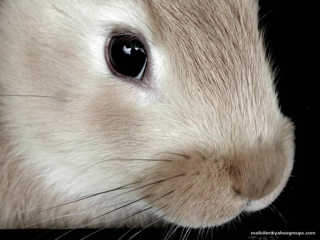 Заяц - это животное практически не привязанное к территории, нор не строит; кролик напротив очень территориален...