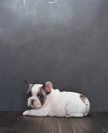 Фотографии собак от Sharon Montrose