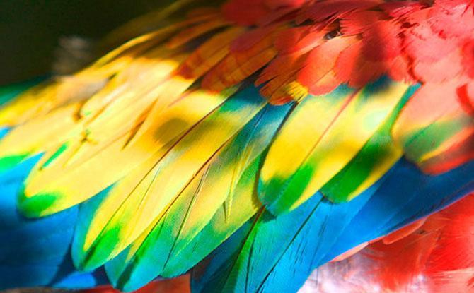 Фотографии животных от британского фотографа Стива Хоскинса