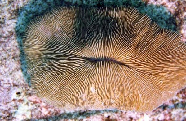 фото самых больших половых губ