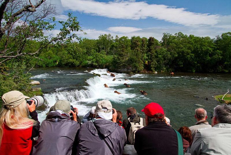 видео нерест лосося и как ловят медведи