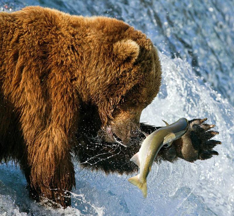 масло для ловли рыбы
