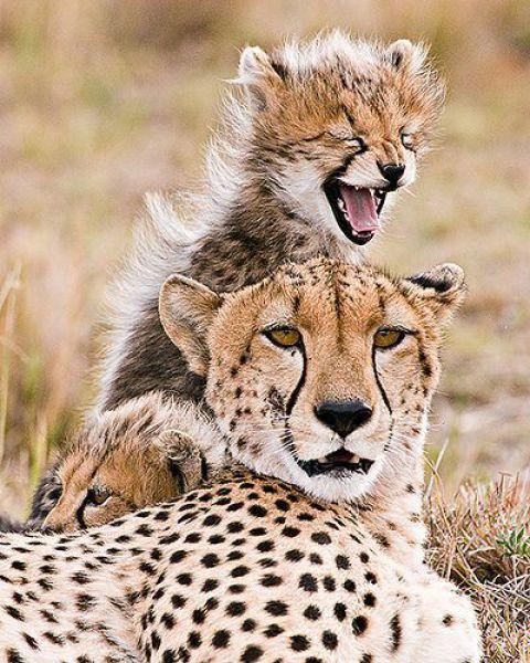 Смешных и забавных животных