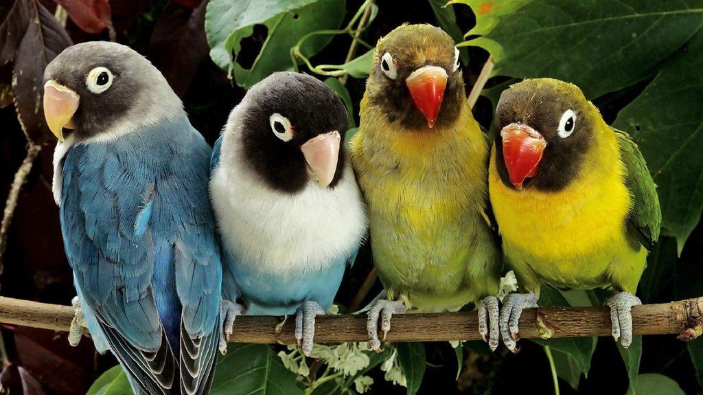 http://animalworld.com.ua/images/2010/December/Animals/Bird/Bird_4.jpg