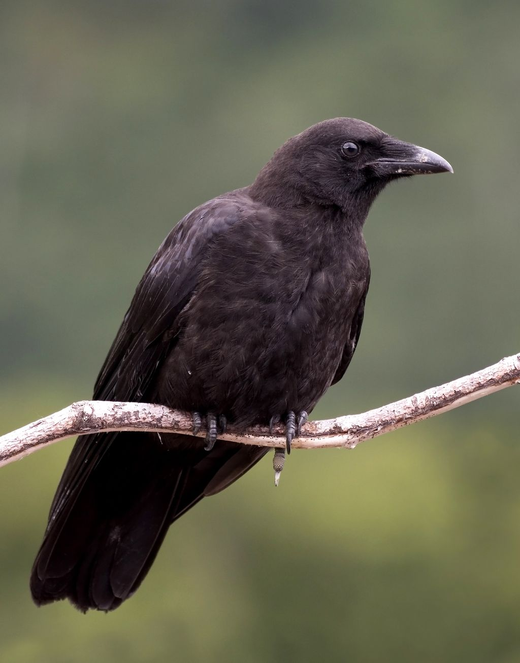 Птицы северо запада россии фото 1