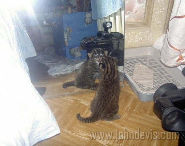 Детство кота рыболова по кличке джон