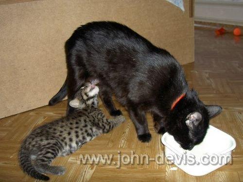 Детство кота-рыболова по кличке Джон Девис
