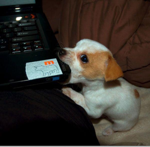 Собака и компьютер