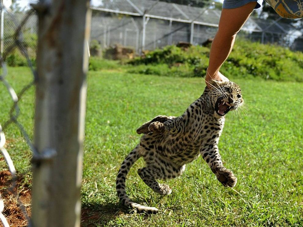 http://animalworld.com.ua/images/2010/December/Foto/Jiv_pl/1/Jv_pl_13.jpg
