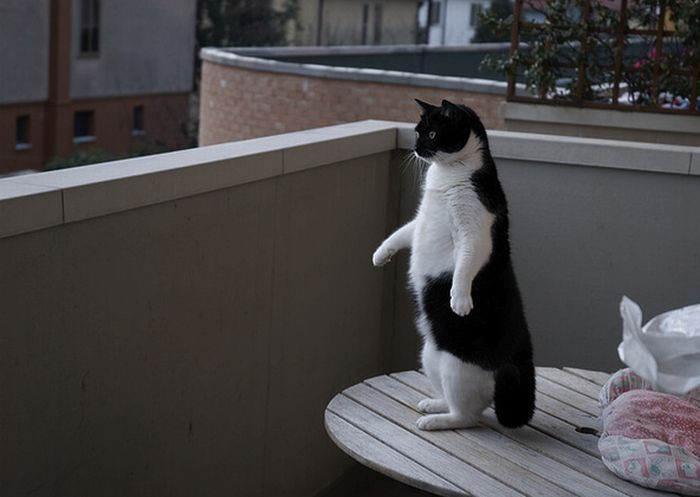 картинки про смешные очень кошек