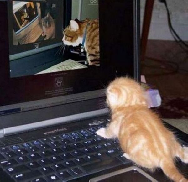 Смешные и забавные котики