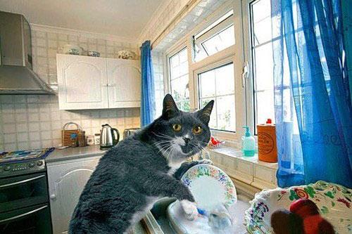 Хозяйственный кот Кузя
