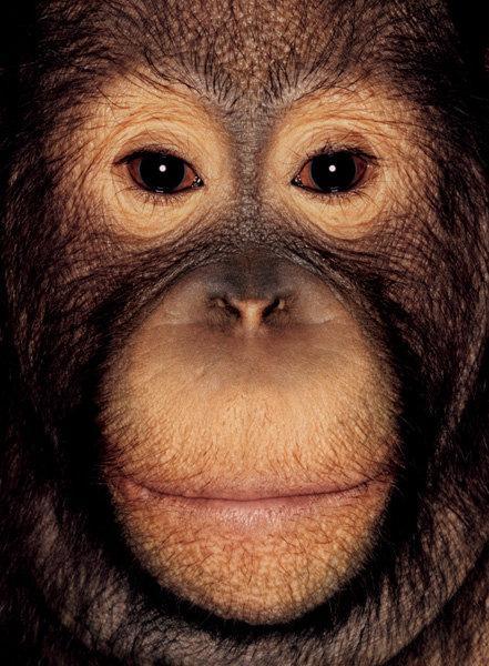 Приматы от James Mollison