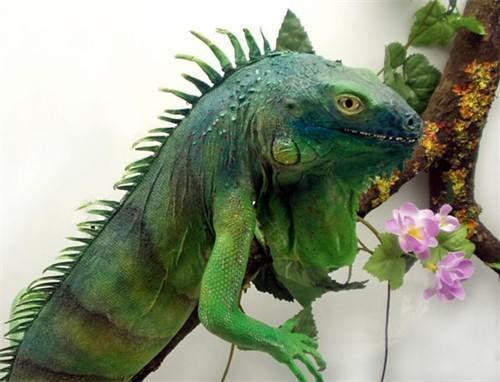 Как завести дракона в домашних условиях