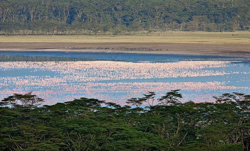 http://animalworld.com.ua/images/2010/February/Bird/Flamingo/Flamingo_5.jpg