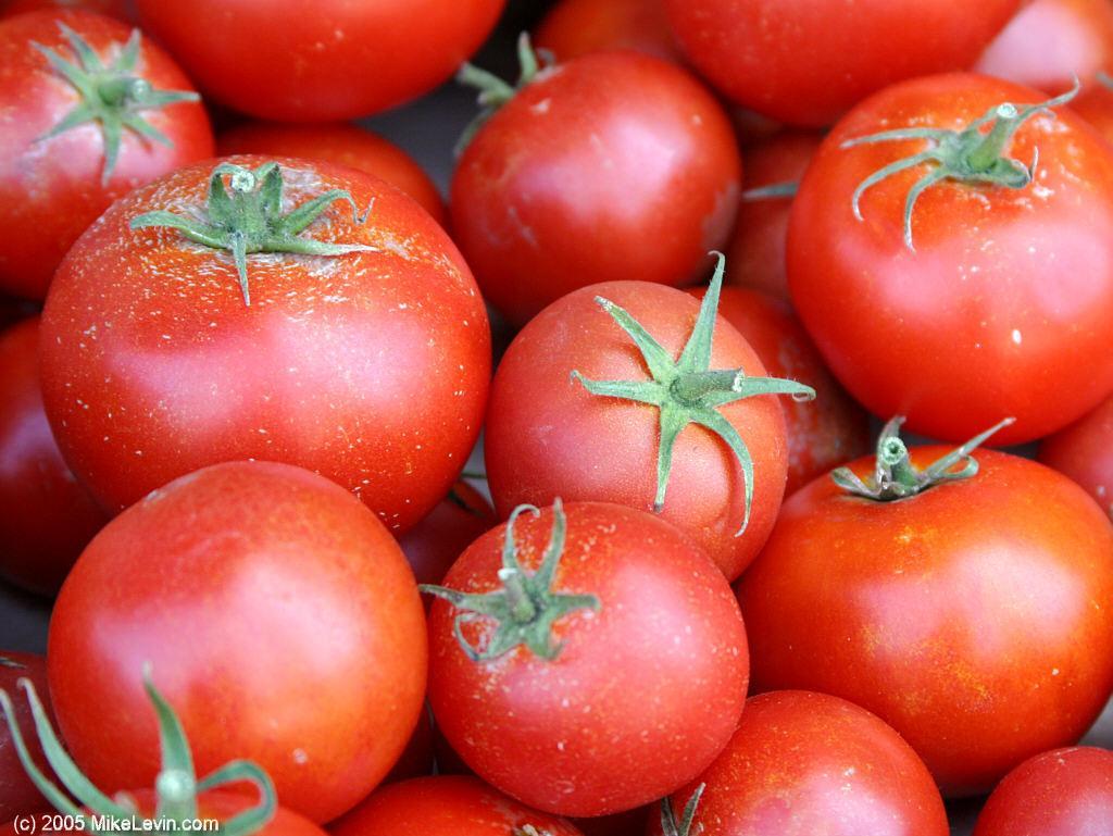 Две  современные группы сортов томатов: одна – дикие черри, другая – томат  «смородинный», произошли от недавнего окультуривания диких томатов