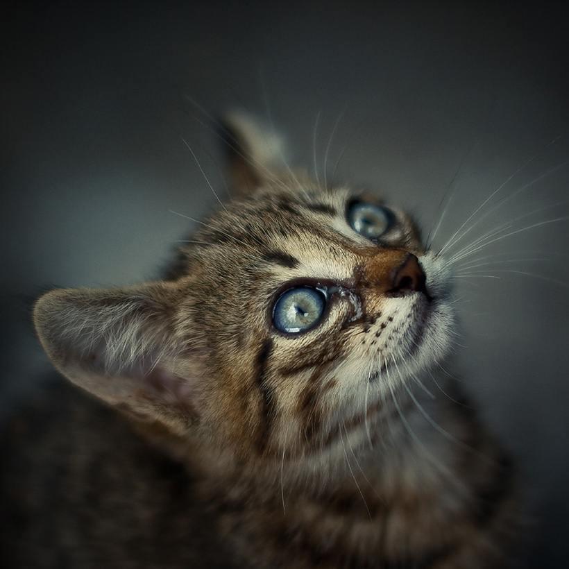 Кошки картинки движущиеся