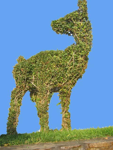 Топиар — искусство фигурной стрижки деревьев и кустарников