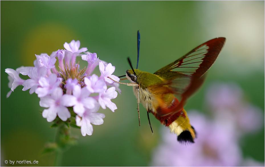 Маленький мир насекомых глазами