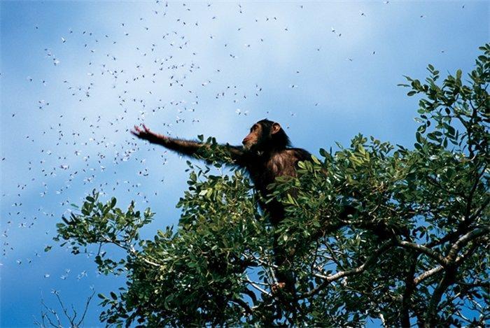 Живая природа от National Geographic
