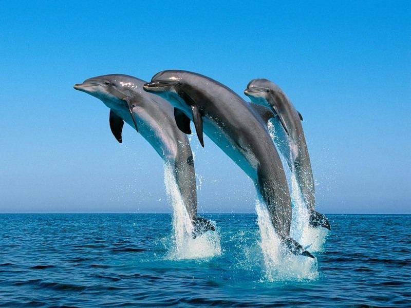 Дельфины - существа поистине удивительные.  Соотношение размера мозга и размера тела
