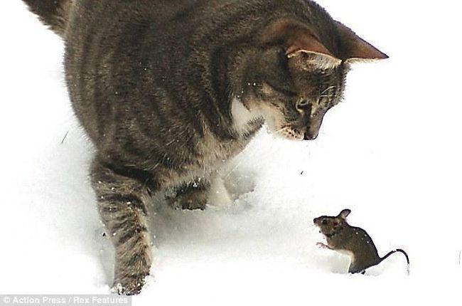 игры кошек приют