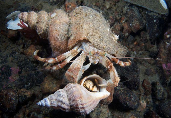 Подводные обитатели Белого моря