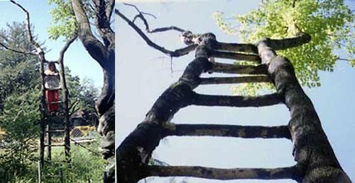 Ladder Tree