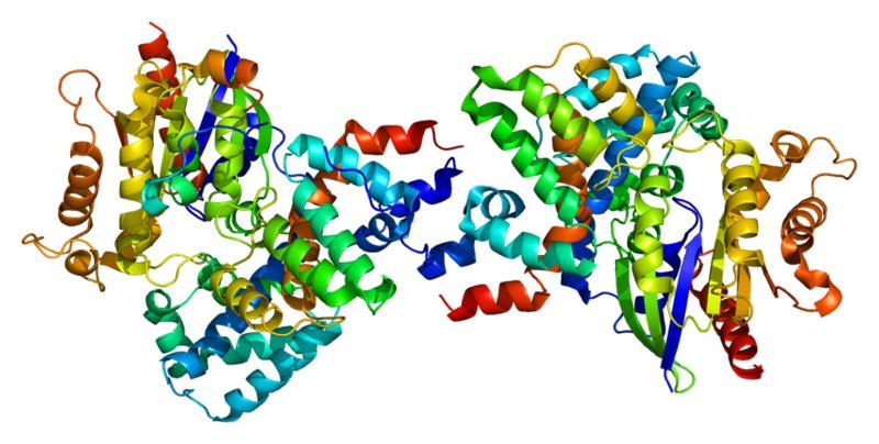 Структура белка, необходимого для работы палочек и колбочек. Трехмерная реконструкция.