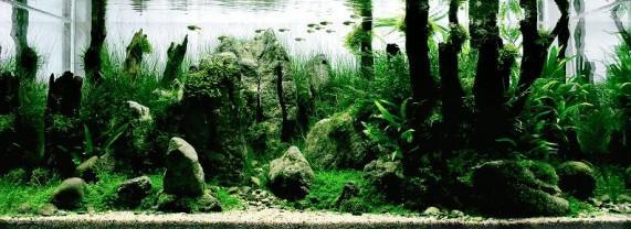 Лучшие аквариумы в мире