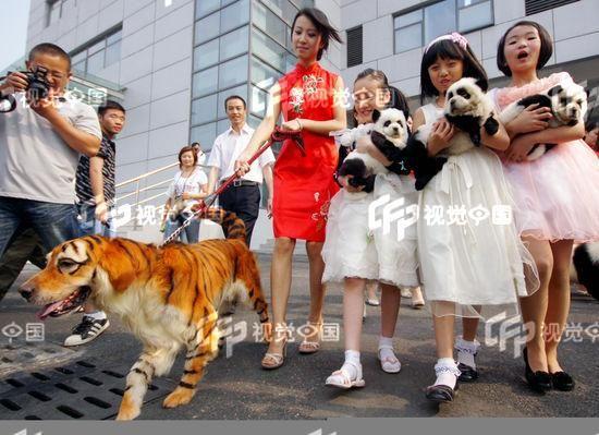Мода на необычных собак захлестнула