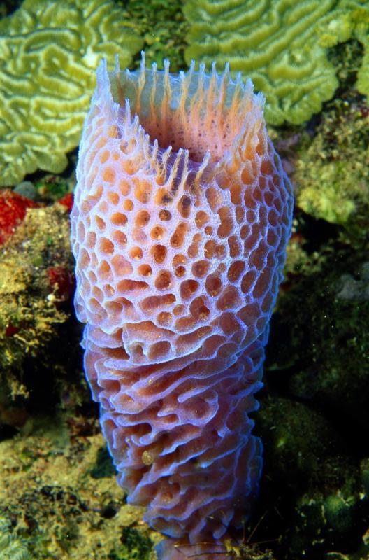 8 июня отмечается Всемирный День Океанов (World Ocean Day)