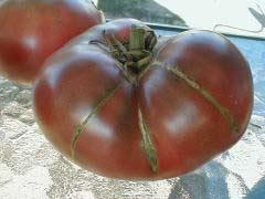 Черные помидоры.