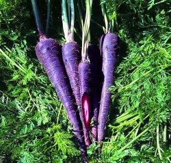 Фиолетовая морковь.