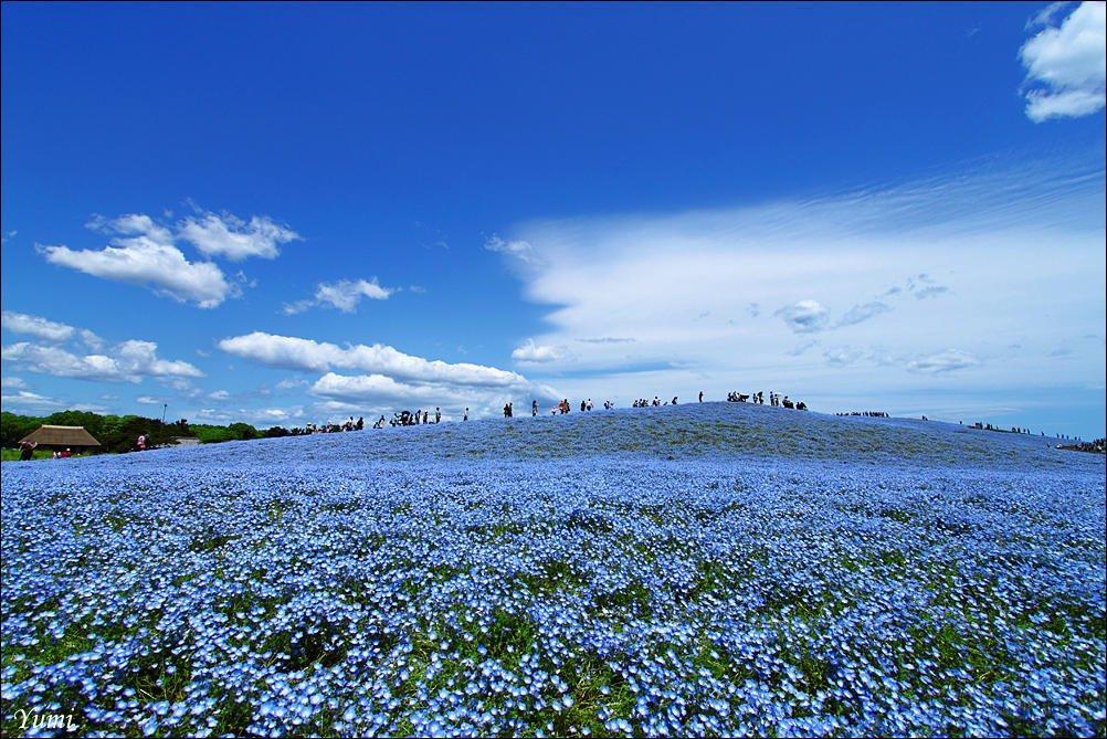 Японский национальный парк хитачи