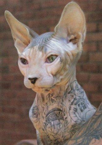 Жестокая мода: тату на домашних животных