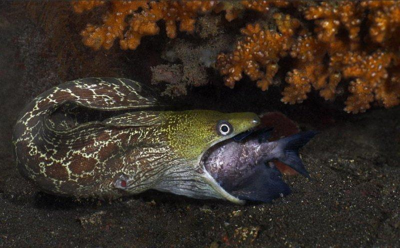 Сказочные обитатели морских глубин