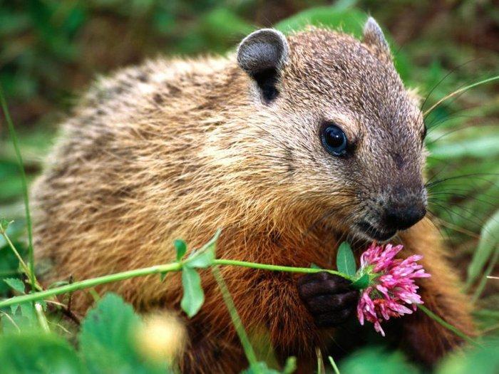 Животные в цветочном антураже
