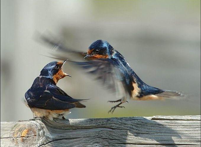 Приколы с птицами Прикольные картинки Веселые картинки с птицами.