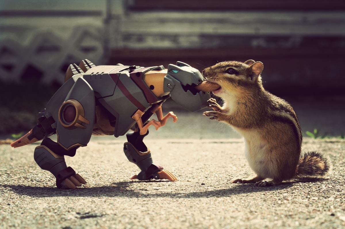 Животных которые радуют и смешат нас